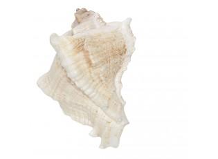 Úchytka mušle- 7*6 cm