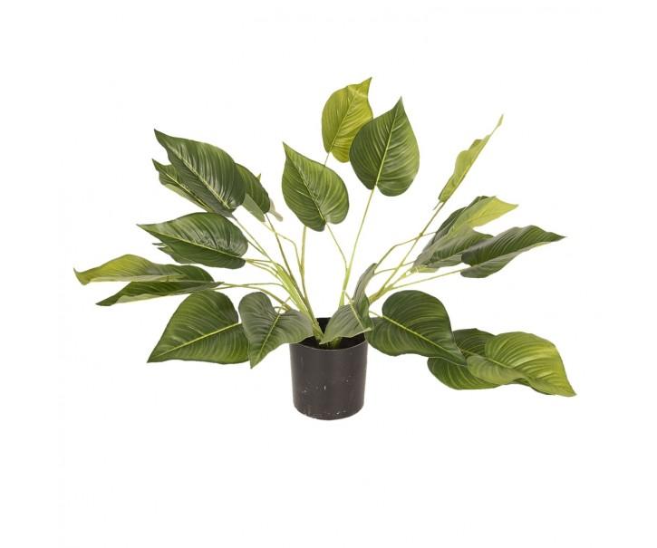 Dekorační pokojová rostlina - 46 cm