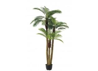 Okrasná trojitá palma v květináči Palm - Ø180*300cm