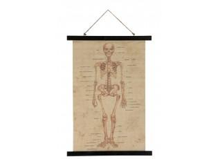 Nástěnná mapa kostra lidského těla - 70*50*2 cm