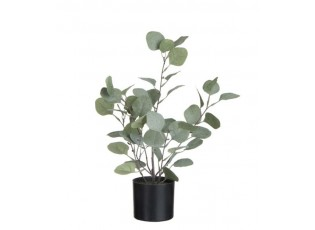 Dekorace Eucalyptus v květináči - Ø12*43cm