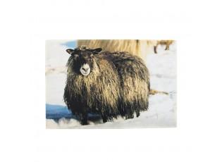 Rohožka ke dveřím Islandská ovce - 75*50*1cm